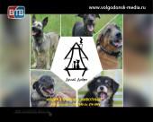В Волгодонске вновь пройдет благотворительная акция в помощь животным