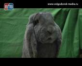 Ушастые пушистики. Впервые в Волгодонск приехали выставка кроликов и голубей