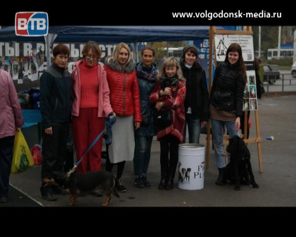 14 тысяч 372 рубля горожане пожертвовали на помощь бездомным животным Волгодонска