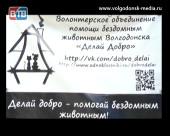 В Волгодонске состоится акция помощи бездомным животным