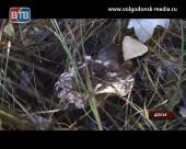 В Волгодонске два человека отравились дикорастущими грибами
