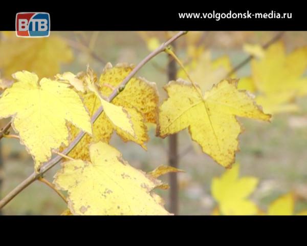«Посади свое дерево». В Волгодонске состоялся массовый зеленый субботник