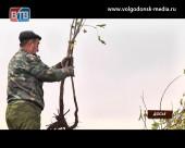 Посади свое дерево! 21 октября в Волгодонске состоится День древонасаждения
