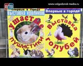 В Волгодонске работает контактная выставка 30 пород кроликов