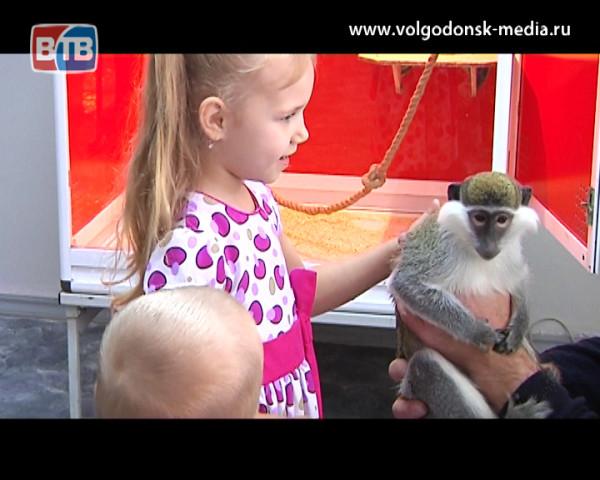 В Волгодонске открылась выставка под названием «Планета обезьян»