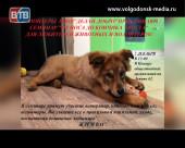 Для всех любителей животных в Волгодонске пройдёт познавательный семинар