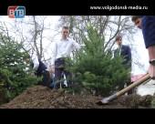 В Волгодонске в 1-ой школе продолжили ежегодную традиционную акцию «Дерево памяти»