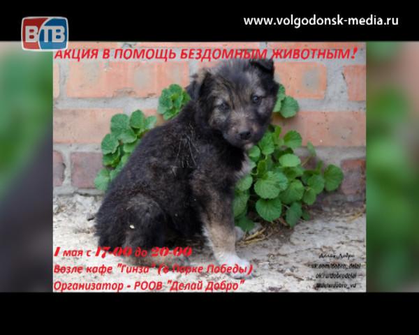 1 мая в Волгодонске пройдёт благотворительная акция по сбору помощи бездомным животным
