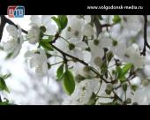 На юге Ростовской области возможны ночные заморозки