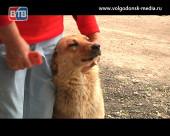 Расправа вместо сострадания. На территории садоводств Волгодонска  происходят массовые отравления собак