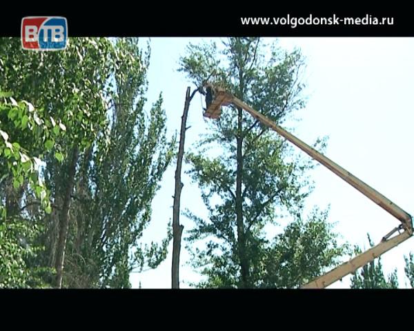 В Волгодонске проводятся работы по спилу аварийно-опасных, сухих деревьев