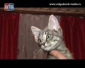 Пушистая аномалия. В Волгодонске живет кошечка с пятью ушами