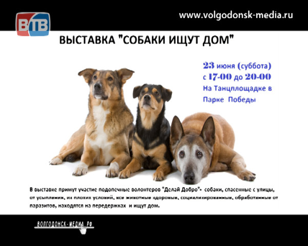 В Волгодонске состоится выставка «Собаки ищут дом»