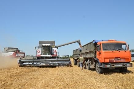 На Дону собрано около восьми миллионов тонн зерна нового урожая