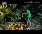 Около 500 подростков Волгодонска трудоустроились за время летних каникул