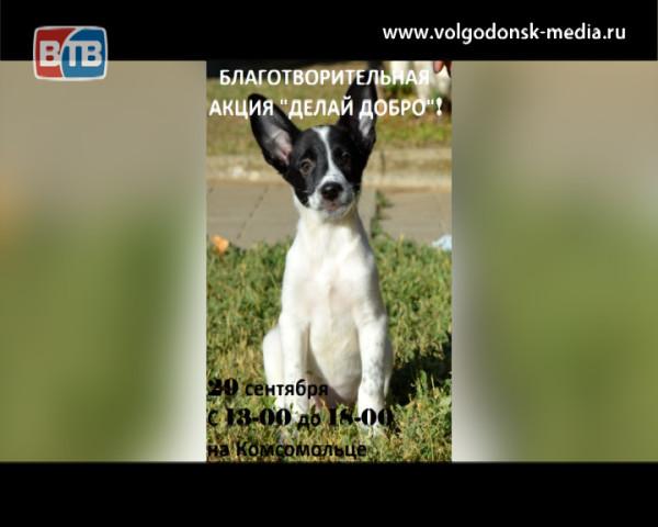 В субботу состоится традиционная благотворительная акция по сбору помощи бездомным животным