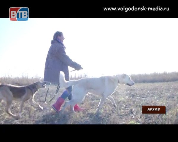 Быть или не быть приюту для безнадзорных животных в Волгодонске?