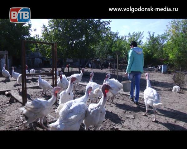 Как в Волгодонске реализуется помощь горожанам в рамках социального контракта