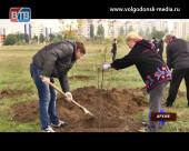 В Волгодонске станет на 2000 больше деревьев и кустарников