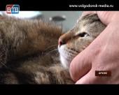 29 ноября в Волгодонске пройдет льготная стерилизация кошек и собак