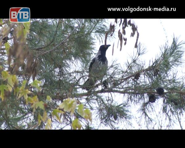 Последние осенние выходные в Волгодонске  пройдут без осадков