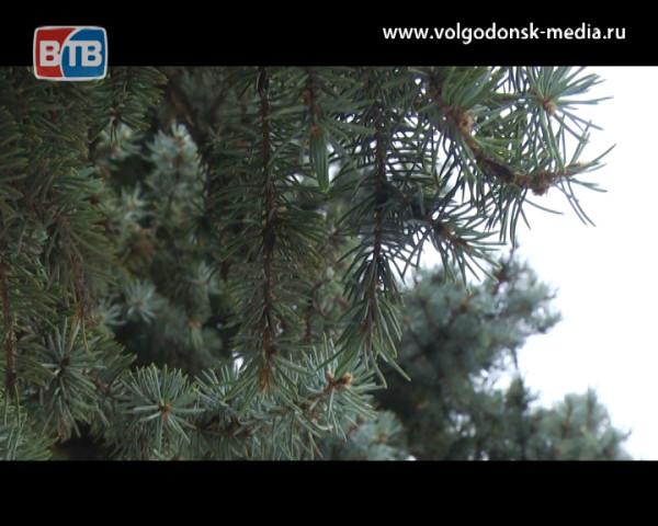 Пасмурно и дождливо: о погоде в Волгодонске на предстоящие выходные
