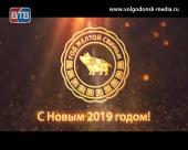 Под знаком декоративной карликовой свинки: о символе 2019 года