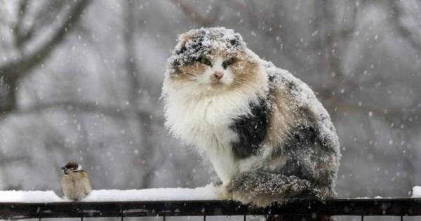 В Ростовской области похолодает до -6 градусов