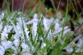 23 апреля по Ростовской области местами сохранятся ночные и утренние заморозки