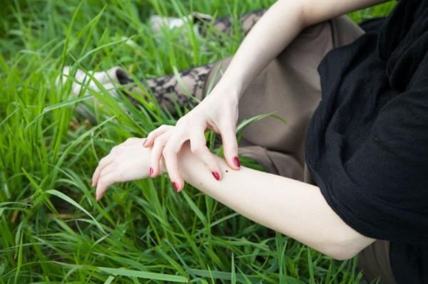 В Ростовской области более 600 человек пострадали за неделю от укусов клещей