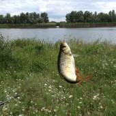 Какую рыбу сейчас можно выловить в Дону?