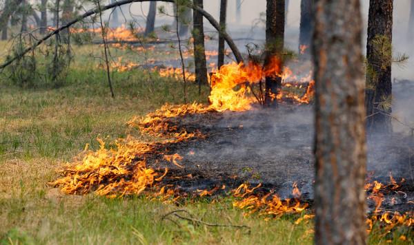 С 10 июня в Ростовской области запрещено посещать леса из-за высокой пожароопасности