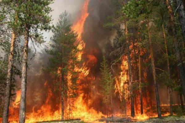 В Ростовской области снова продлили режим ограничения пребывания в лесах