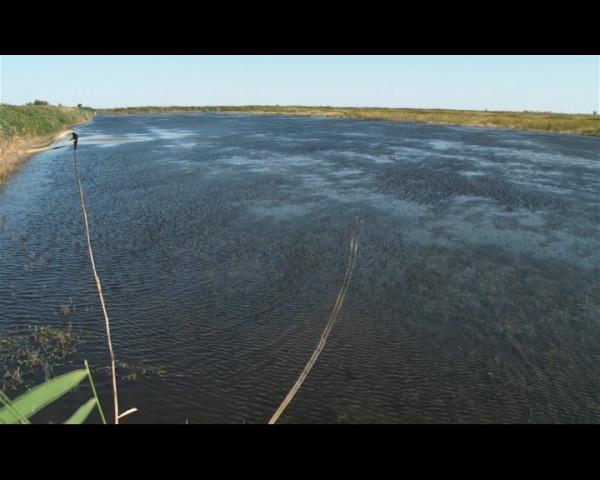 2 миллиона мальков ценной рыбы выпустили в Цимлянское море