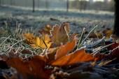 Заморозки прогнозируются в Ростовской области