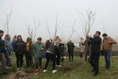 В День древонасаждений в Волгодонске и окрестностях высадили более 850 деревьев и кустарников