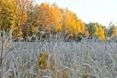 Заморозки до -5 градусов ожидаются в Ростовской области