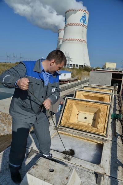 В акваторию водоёма-охладителя Ростовской АЭС выпущено 9,5 тонн рыбы