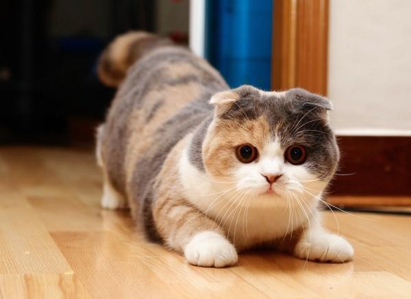 Ростов занял десятое место в рейтинге самых «кошачьих» городов России