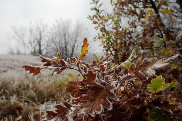 Морозы до -4 градусов ожидаются в Ростовской области на этой неделе