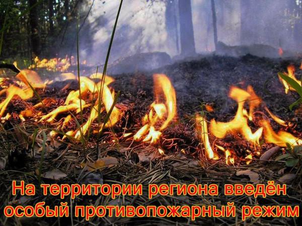 Особый противопожарный режим установили в Ростовской области
