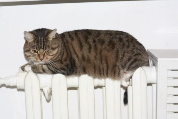 Отопительный сезон в Волгодонске продлевают: на Дон идет очередное похолодание