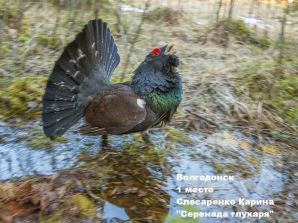 volgodonsk_1-mesto_slesarenko-karina_serenada-gluharya-800x600