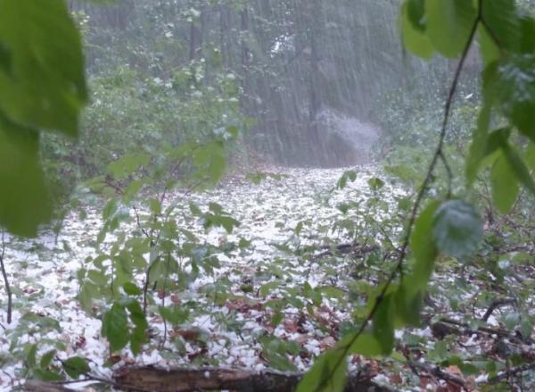 Сильные дожди с грозой и ветром ожидаются в Ростовской области