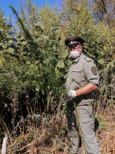 Во время очередного рейда уничтожено 235 кустов дикорастущей конопли