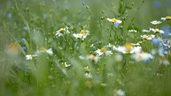 Софья Бубен из Волгодонска заняла первое место в IV Международном конкурсе детских фотографий «В объятиях природы» в номинации «Флора»