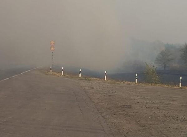 В Ростовской области из-за лесного пожара перекрыли дорогу