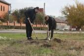 В Экологическом сквере общественники и студенты провели уходные работы и высадили 70 саженцев деревьев и кустарников