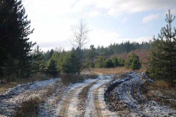 За незаконную вырубку сосен и елей в Ростовской области удвоили размер штрафа