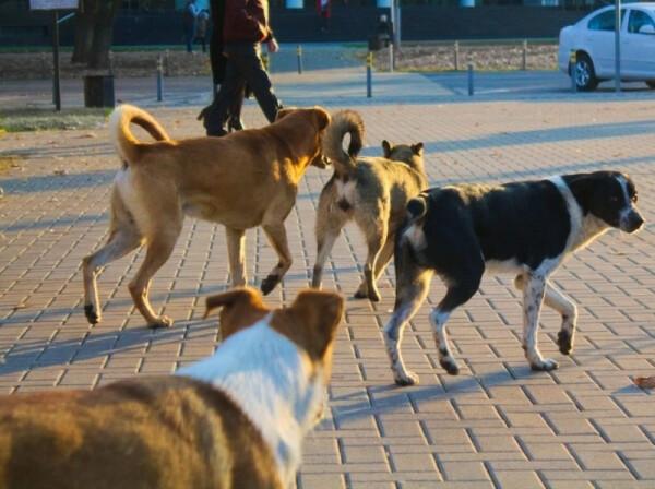 В Волгодонске подрядчик приступил к исполнению контракта по отлову бродячих бездомных животных